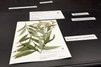 herbarium_2.jpg